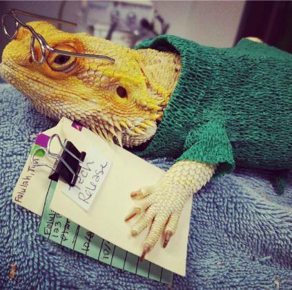 Parker Animal & Bird Clinic in Plano, TX, photo #7