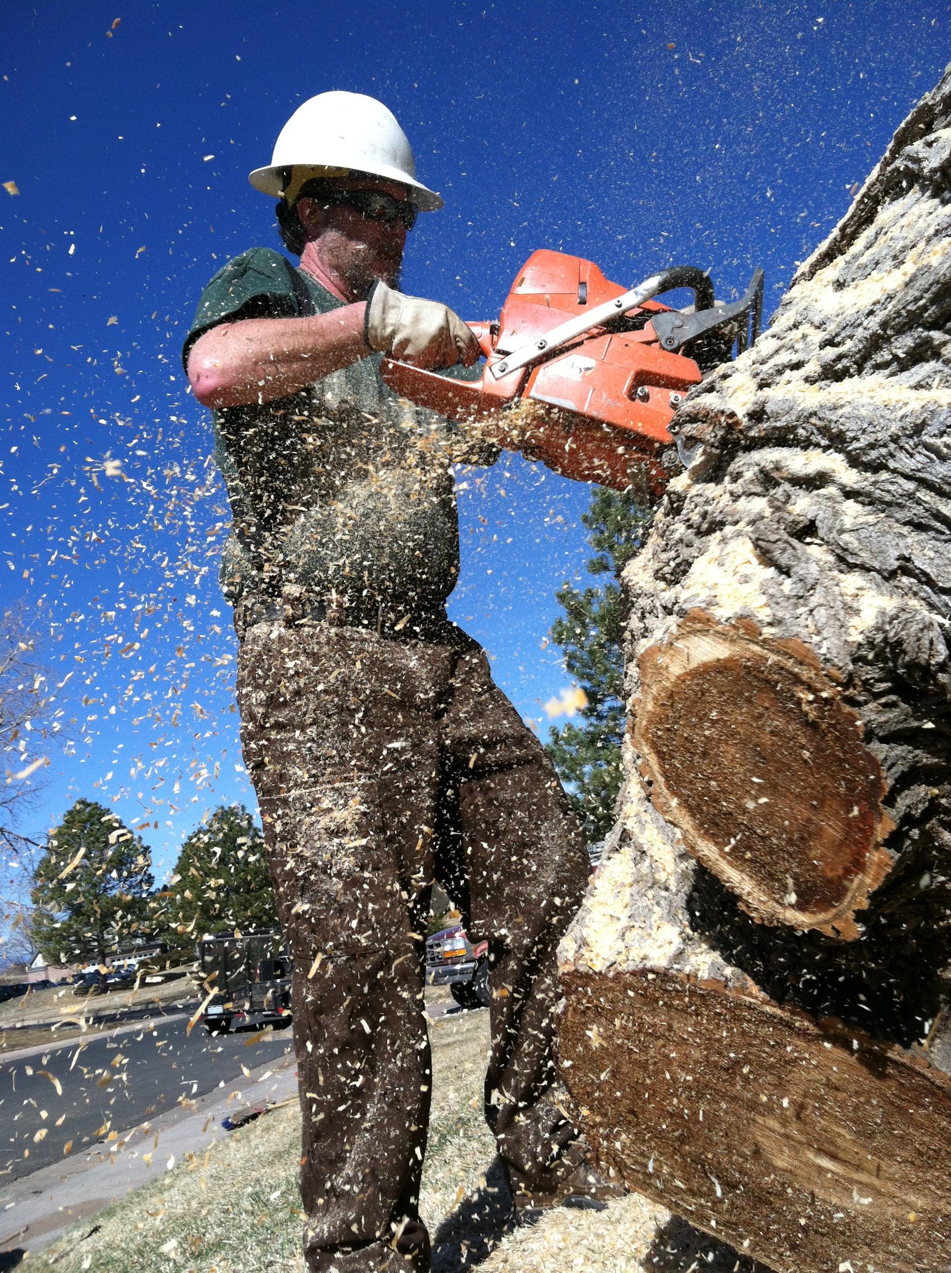 Mortensen Tree Service, Inc. image 10