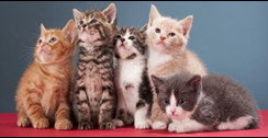 Cats Vermont-Veterinary Clinic for Cats image 1