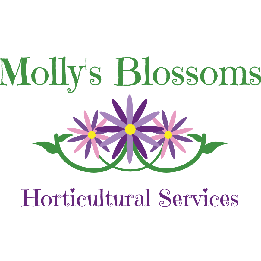 Molly's Blossoms