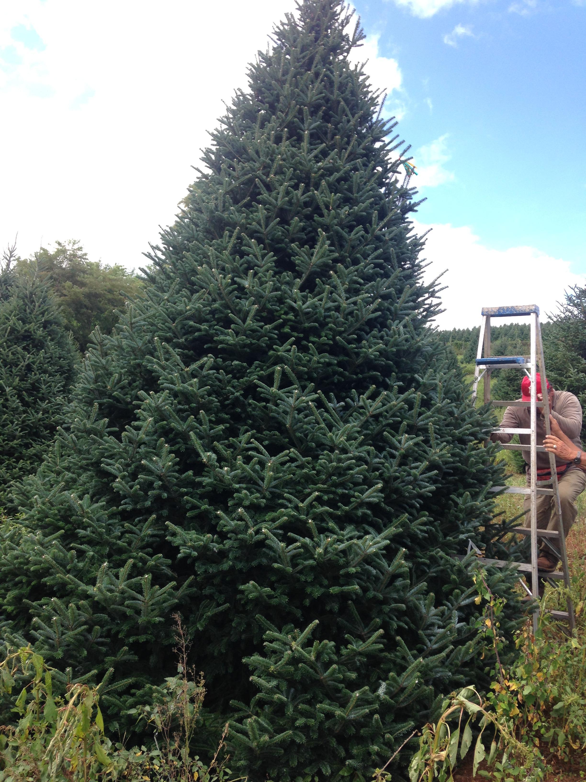 Dave's Christmas Tree Lot image 48