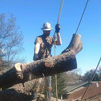 Morgan Tree Service image 1