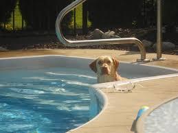 Ahner Inground Pools Unlimited LLC image 5