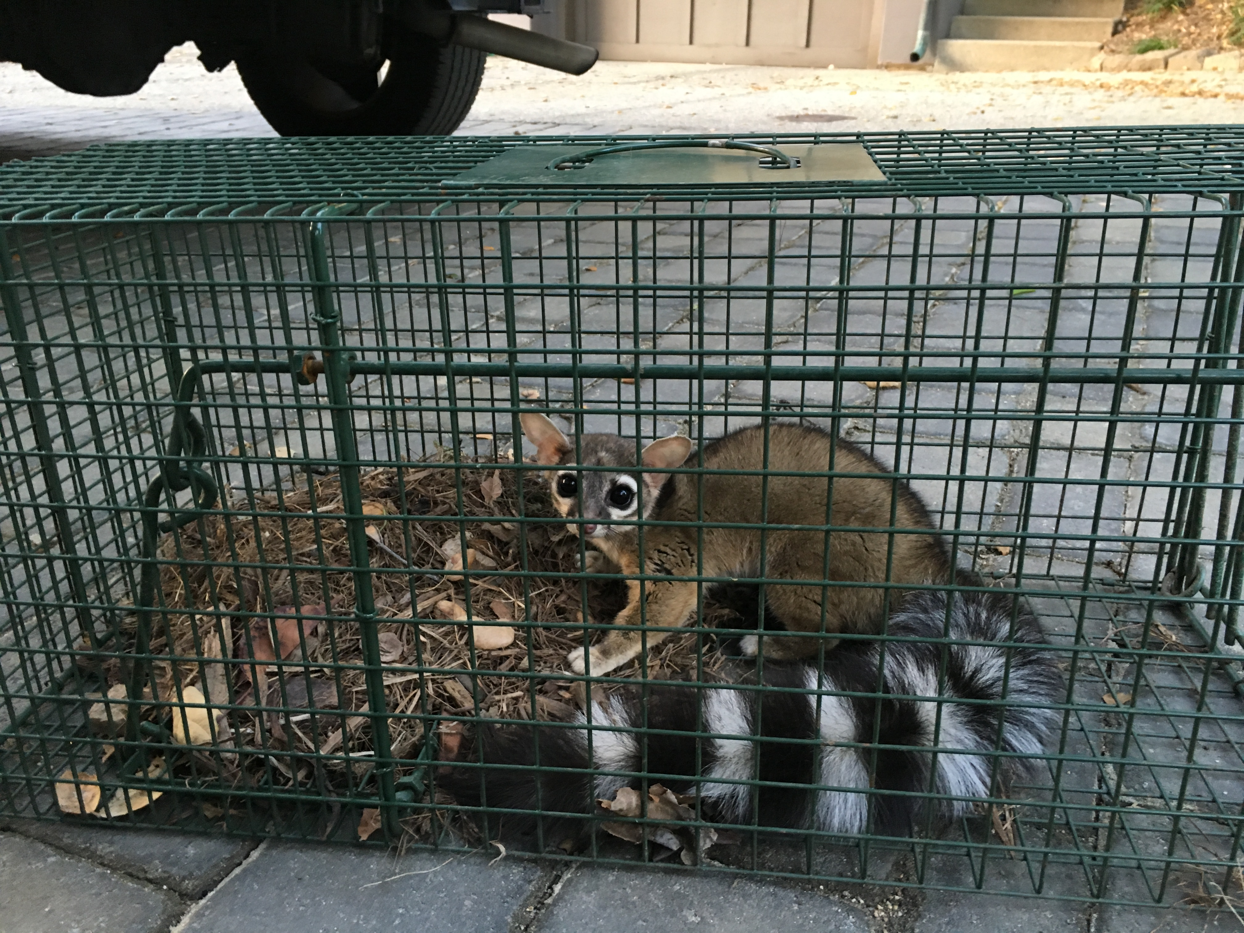 Urban Wildlife Trapping Experts image 7