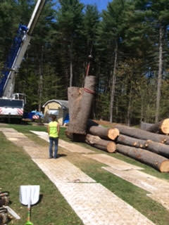 Greenleaf's Tree Service image 19