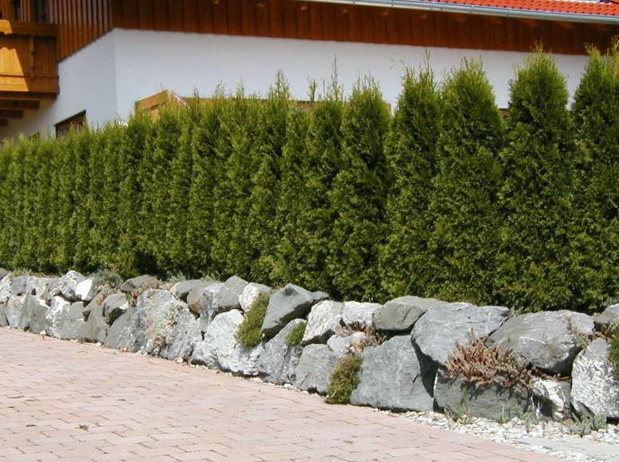 Baumschulen kahl in pl berg ffnungszeiten adresse - Kahl gartenbau ...