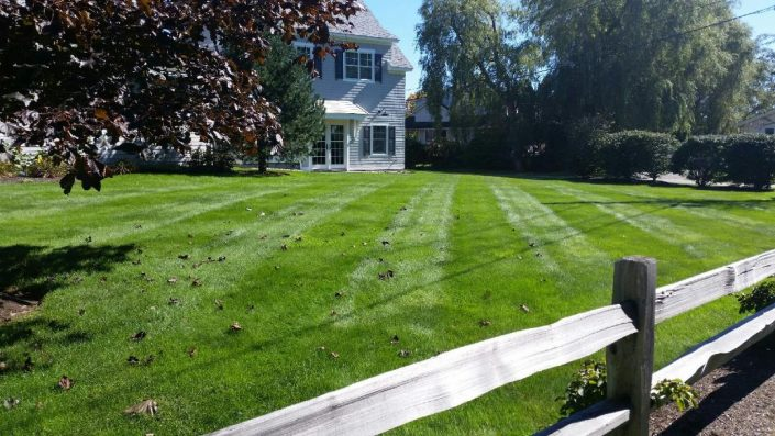 Mainely Grass, Inc image 1