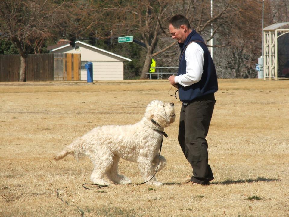 Focus Dog Training - Obedience Dog Training image 1
