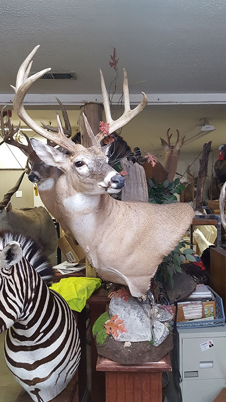 American Taxidermy Inc. image 9