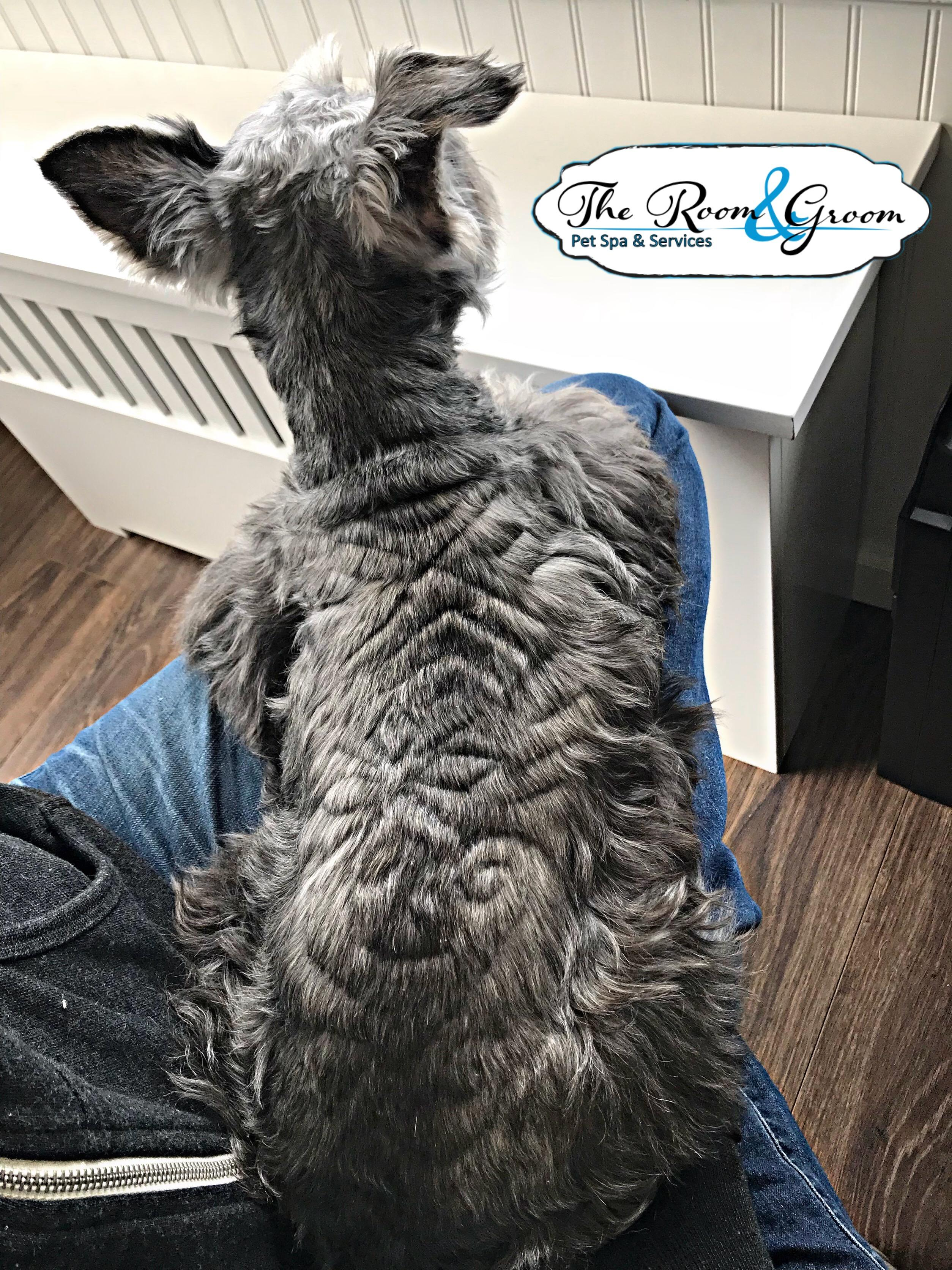 The Room & Groom, Pet Spa & Services image 52