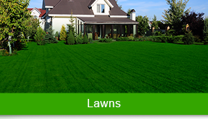 Green Carpet Lawn Care LLC in Somers, CT, photo #3
