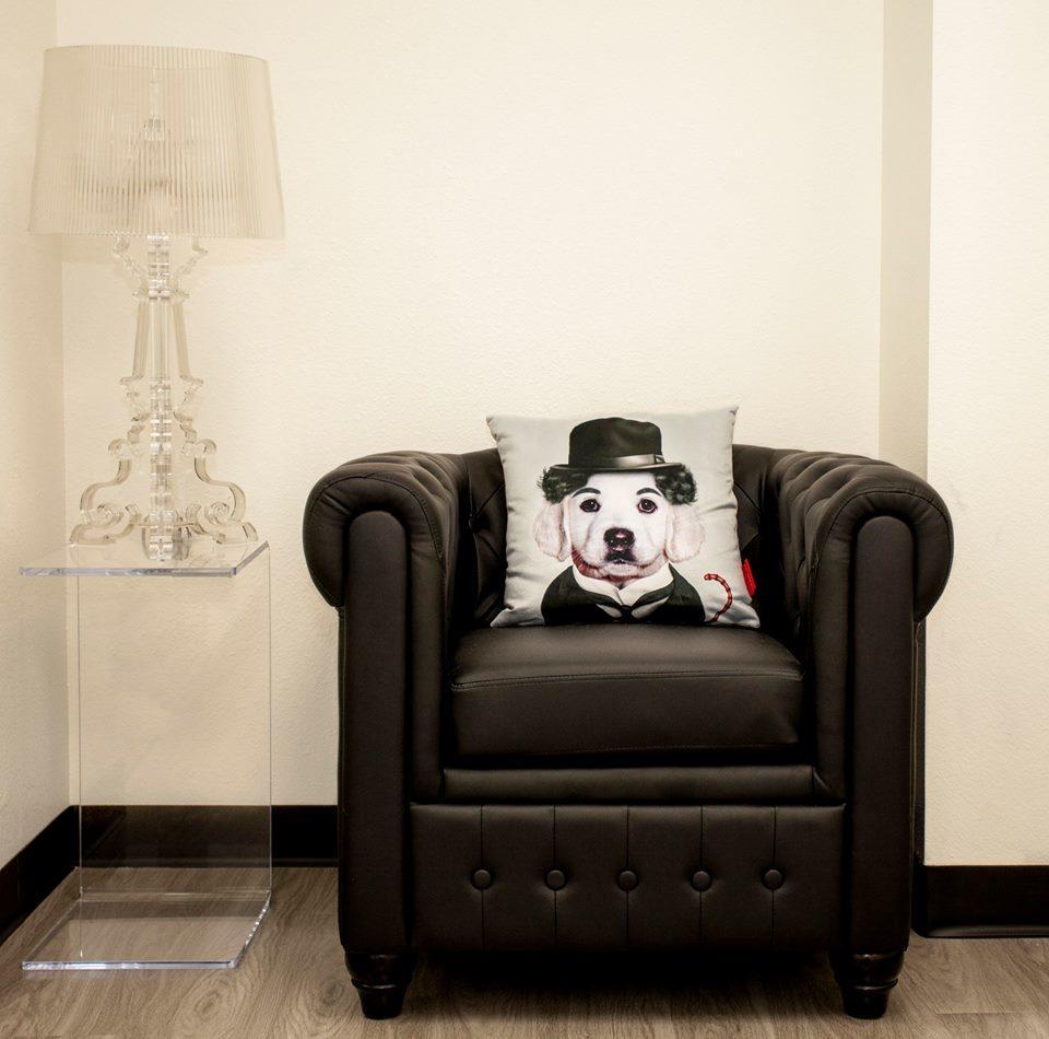 D Pet Hotels Los Angeles image 10