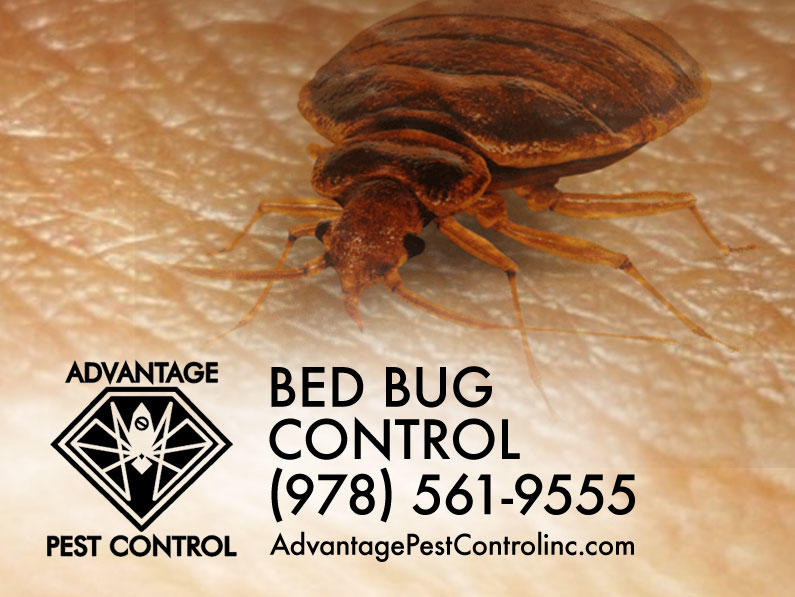 Advantage Pest Control, Inc image 2