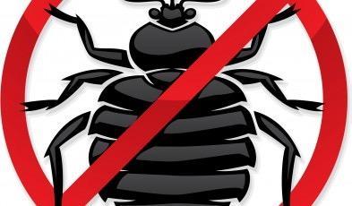 Bye Bye Bugs image 2