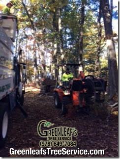 Greenleaf's Tree Service image 35