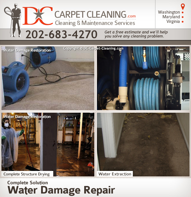 DC Carpet Cleaning image 2