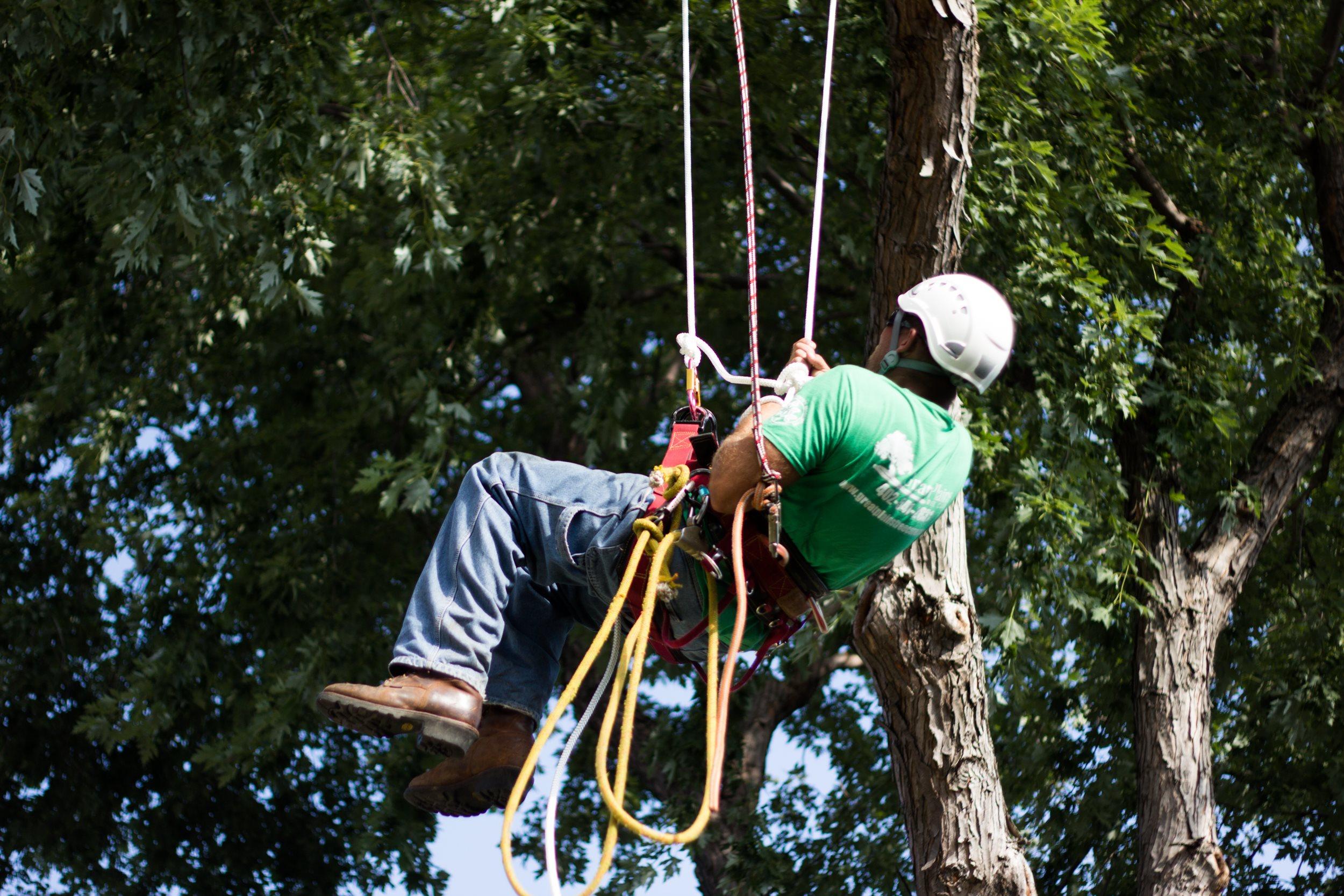 Great Plains Tree Care image 0