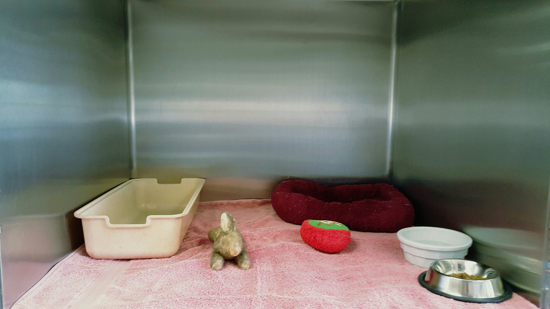 VCA Town and Country Animal Hospital image 3