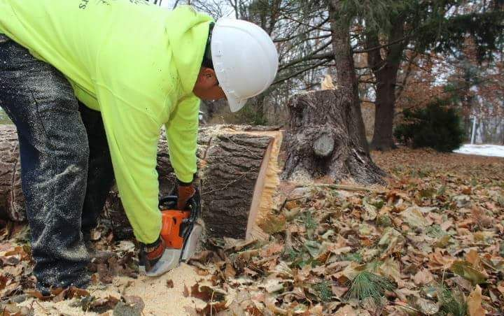Four Brothers Tree Service Inc. image 23