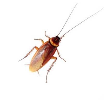 International Exterminator Co., Inc. image 5