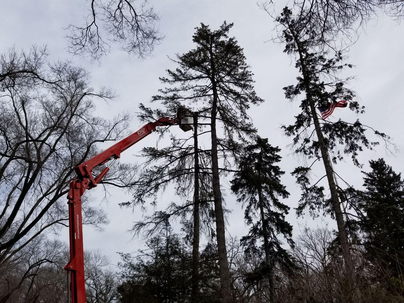Rivas Tree Service image 11