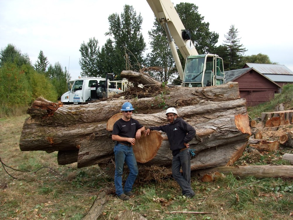 Wind Thin Tree Service Inc. image 3