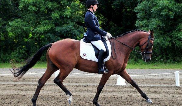 Whisper Wind Equestrian Center Inc image 0