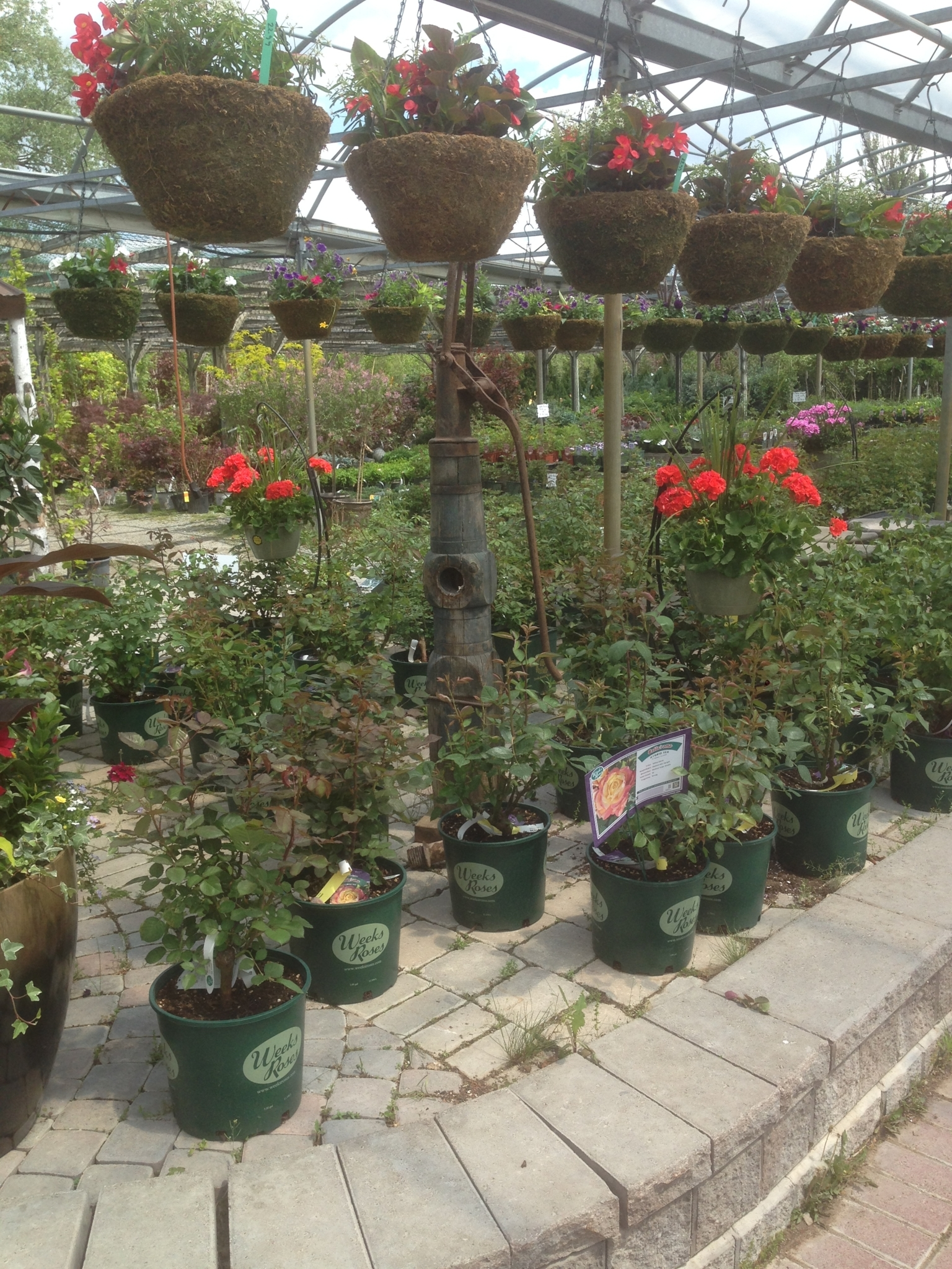 Holland Valley Nursery in Holland Landing: Holland Valley Garden Nursery