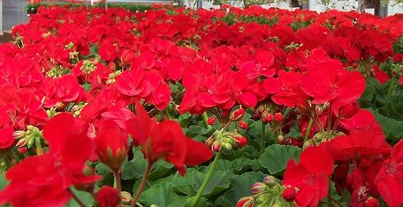 Sunset Gardens Greenhouse & Floral image 2