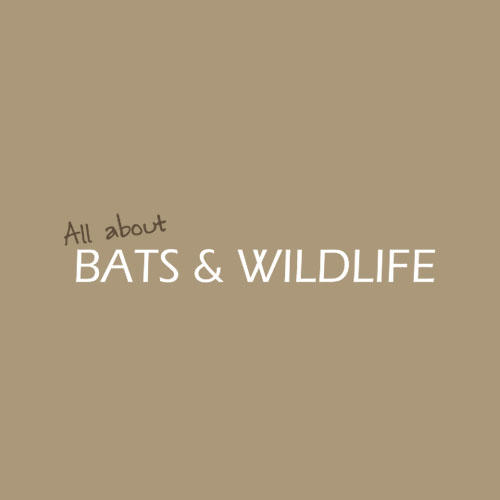 All About Bats and Wildlife