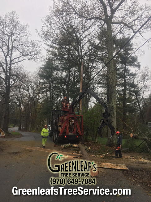 Greenleaf's Tree Service image 31