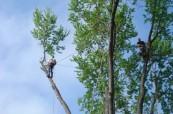 Patrick Musser Tree Service image 4