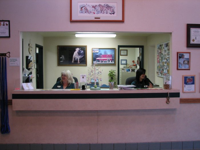 VCA Woodland East Animal Hospital image 4