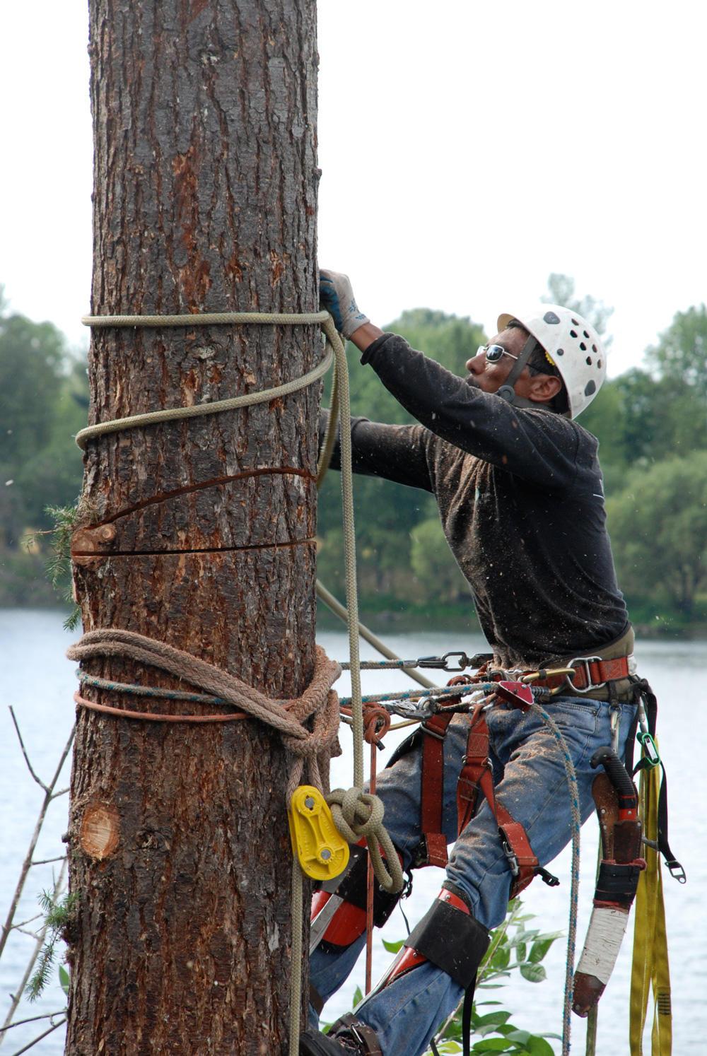 Wind Thin Tree Service Inc. image 2