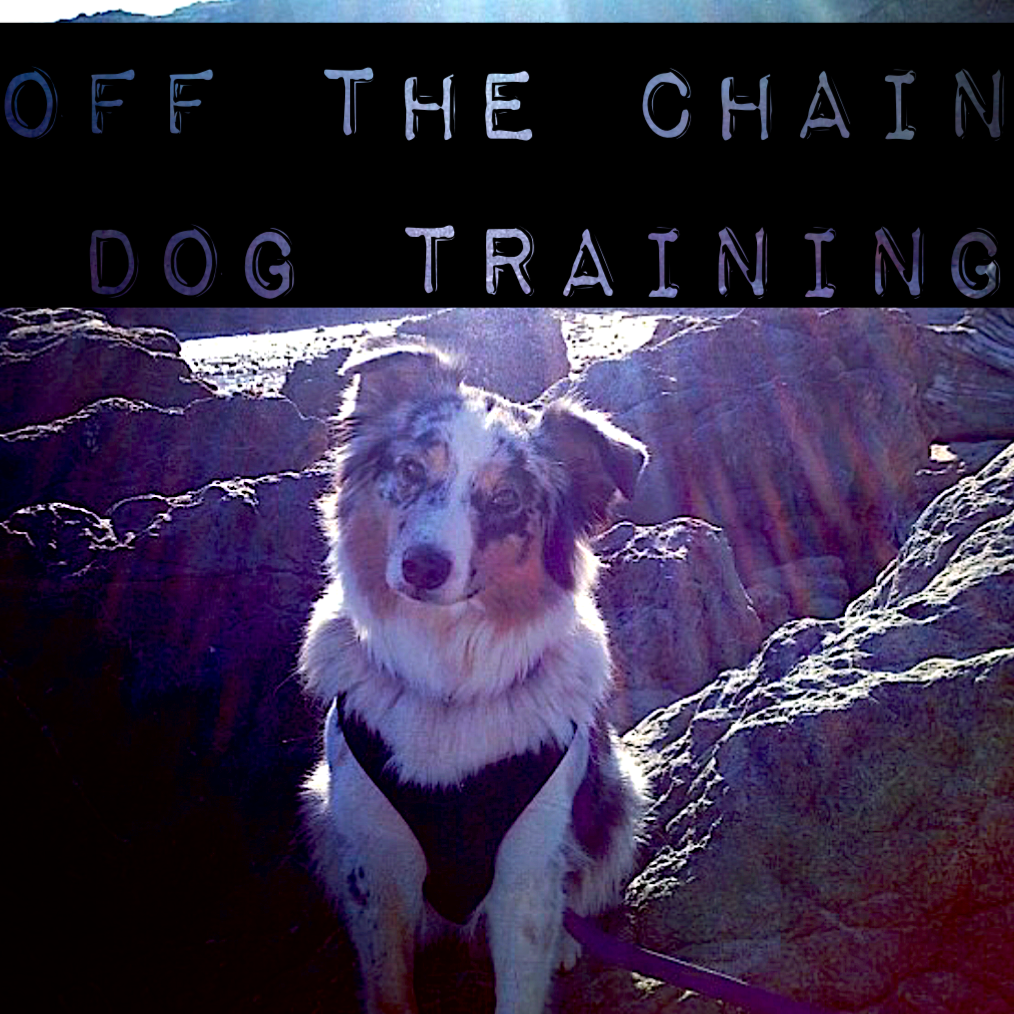 Off The Chain Dog Training