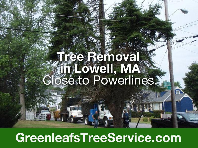 Greenleaf's Tree Service image 16
