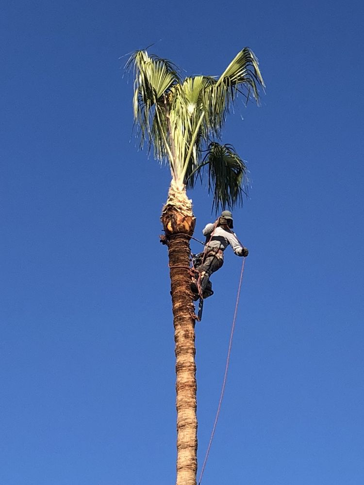 Golden State Tree Service image 8