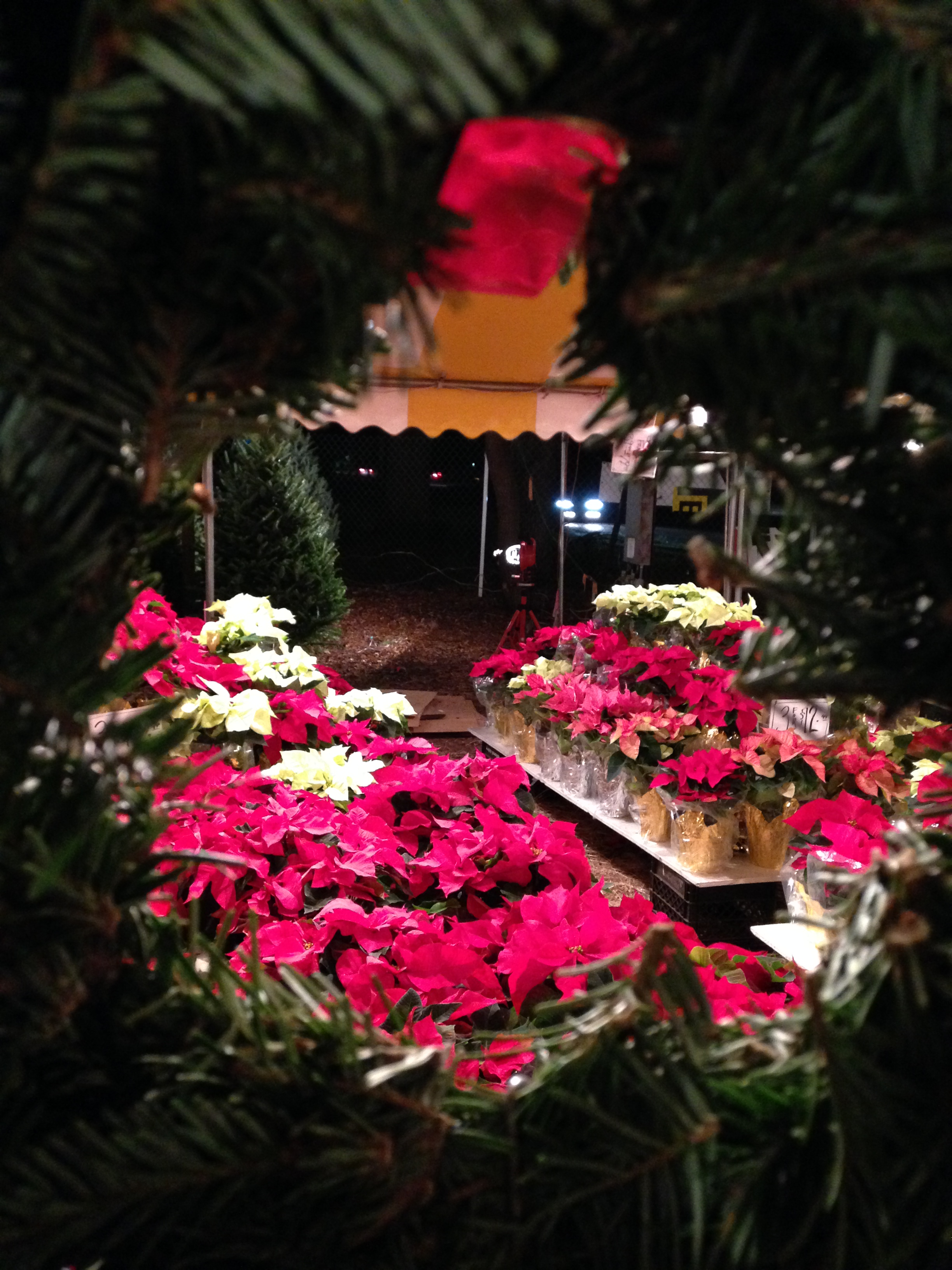 Dave's Christmas Tree Lot image 98
