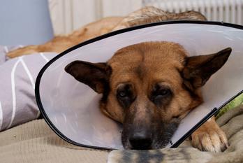 Brooklyn Road Veterinary Clinic image 6