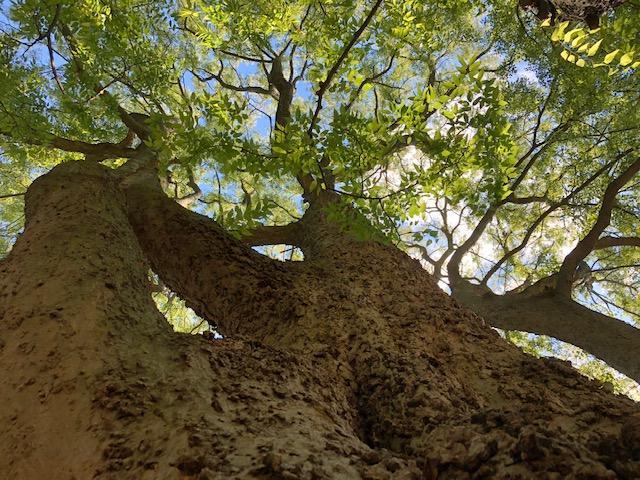 Clipper Tree & Landscape, Inc. image 21