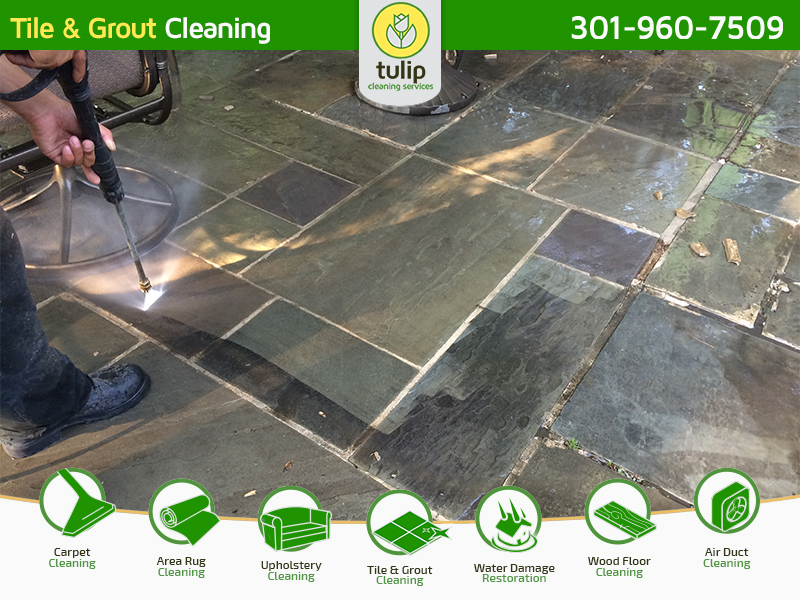 Tulip Cleaning Services In Potomac Md Whitepages