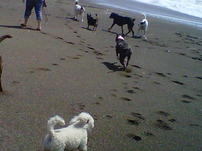 Fetch! Pet Care image 31