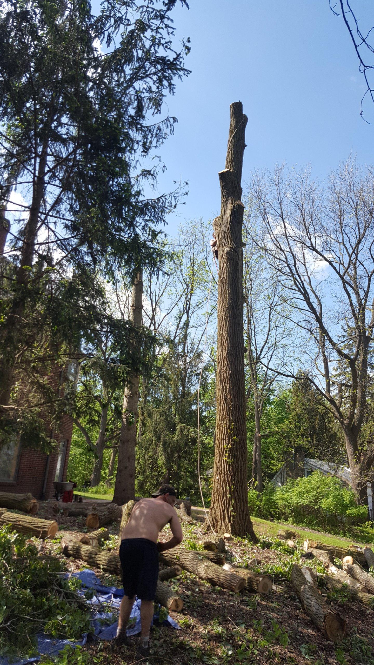 Coffman's Tree Service image 17
