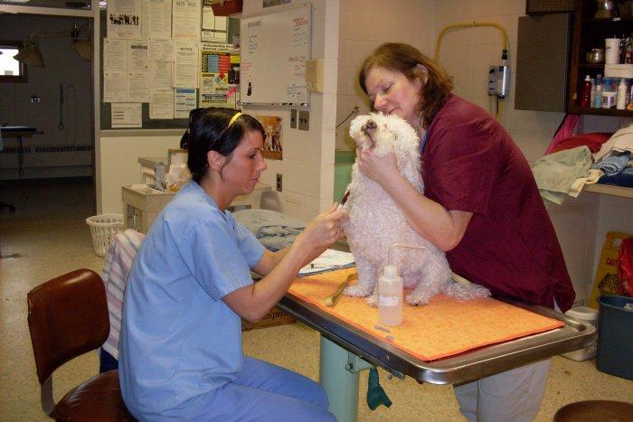 VCA Laconia Animal Hospital image 5