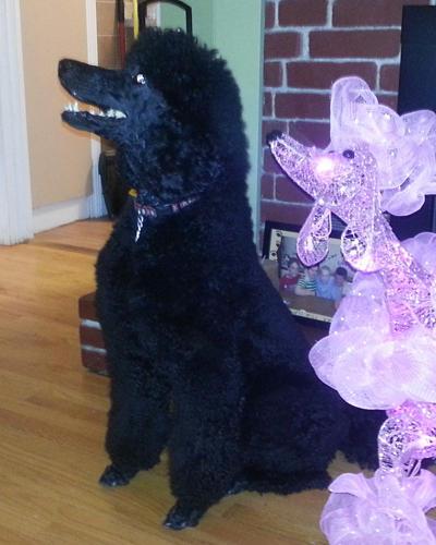 Bark Avenue Pet Salon image 4