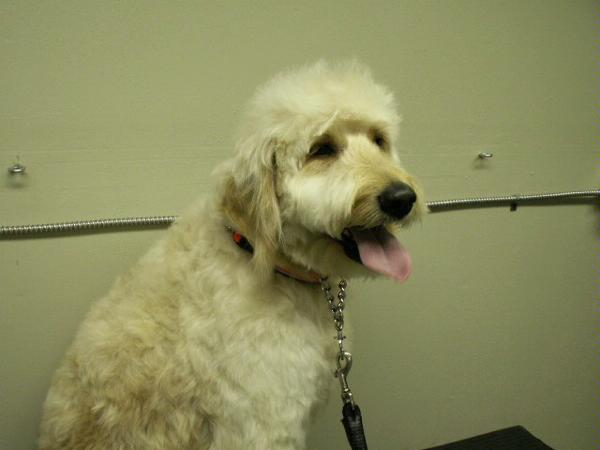 Just Great Grooming image 0