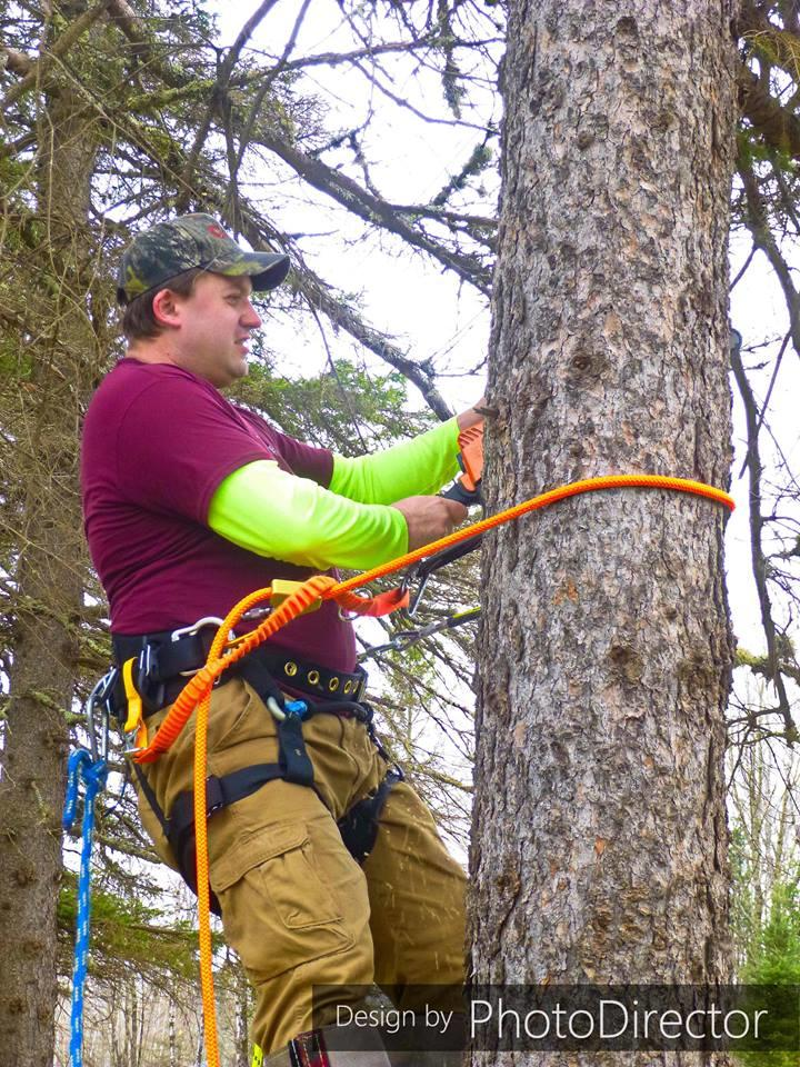 Joe's Tree Service image 5