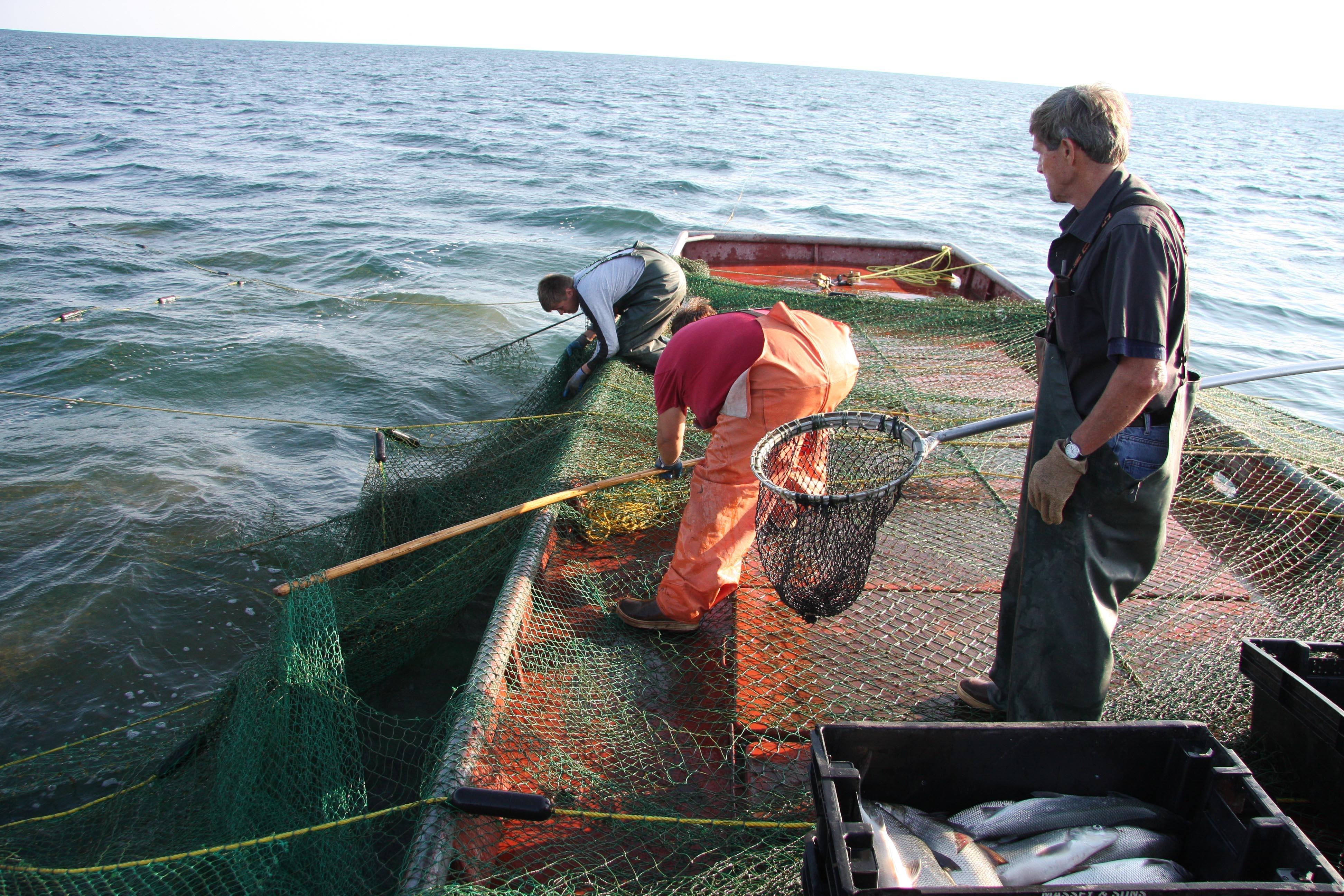 Massey Fish Co. image 9