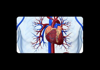 Cerruti Dr. Paolo Cardiologo