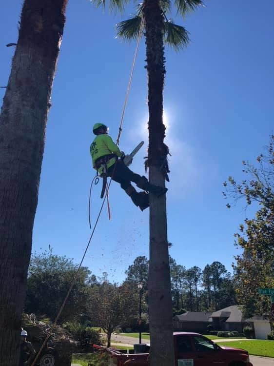 Tree Cutters of Florida